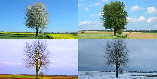 Que vous inspirent ces photos for Le jardin des 4 saisons pusignan